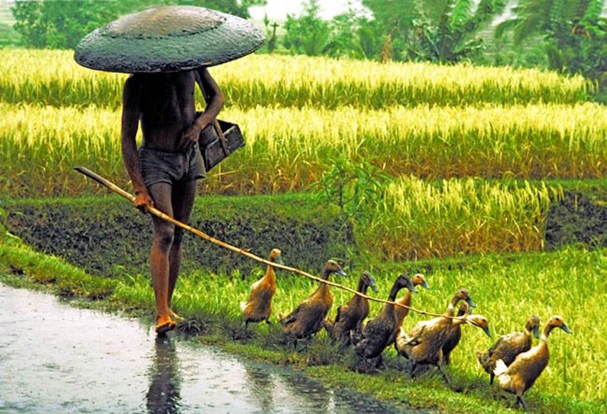 Walking in the rice fields:)